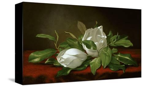 Magnolia-Martin Johnson Heade-Stretched Canvas Print