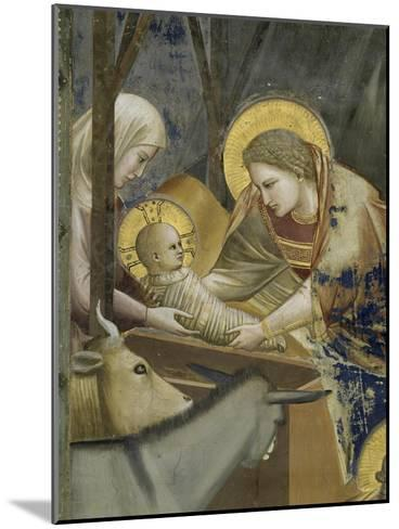 The, Detail Nativity-Giotto di Bondone-Mounted Giclee Print