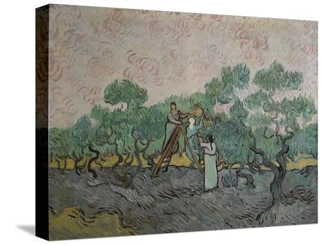 The Olive Pickers, Saint-Remy, c.1889-Vincent van Gogh-Stretched Canvas Print