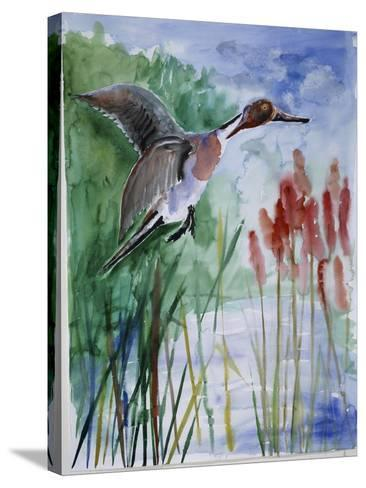 Pintail Duck-Sir Roy Calne-Stretched Canvas Print