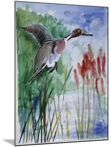 Pintail Duck-Sir Roy Calne-Mounted Giclee Print