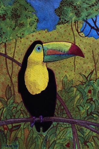 Toucan-John Newcomb-Stretched Canvas Print
