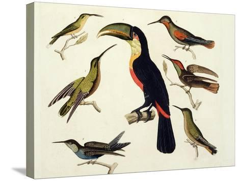 """Native Birds, Including the Toucan (Centre), Amazon, Brazil, from """"Le Costume Ancien Et Moderne""""-Friedrich Alexander Humboldt-Stretched Canvas Print"""