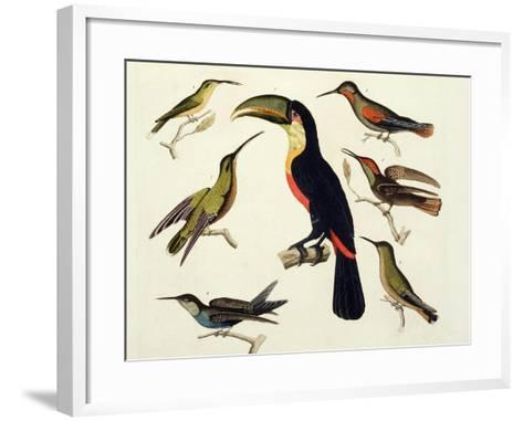 "Native Birds, Including the Toucan (Centre), Amazon, Brazil, from ""Le Costume Ancien Et Moderne""-Friedrich Alexander Humboldt-Framed Art Print"