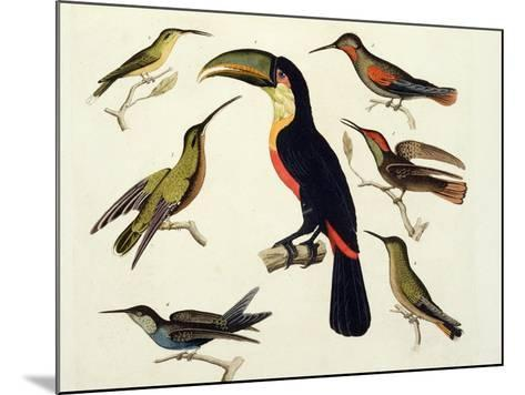 """Native Birds, Including the Toucan (Centre), Amazon, Brazil, from """"Le Costume Ancien Et Moderne""""-Friedrich Alexander Humboldt-Mounted Giclee Print"""