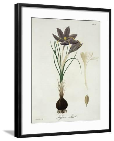 """Saffron Crocus from """"Phytographie Medicale"""" by Joseph Roques, Published in 1821-L.f.j. Hoquart-Framed Art Print"""