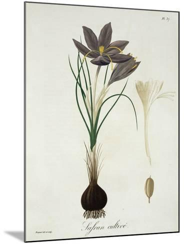 """Saffron Crocus from """"Phytographie Medicale"""" by Joseph Roques, Published in 1821-L.f.j. Hoquart-Mounted Giclee Print"""