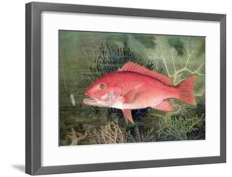 """Red Snapper, from """"Game Fishes of the United States,"""" Published 1878-S.a. Kilbourne-Framed Art Print"""