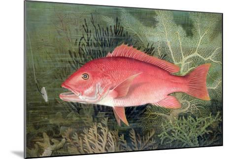 """Red Snapper, from """"Game Fishes of the United States,"""" Published 1878-S.a. Kilbourne-Mounted Giclee Print"""