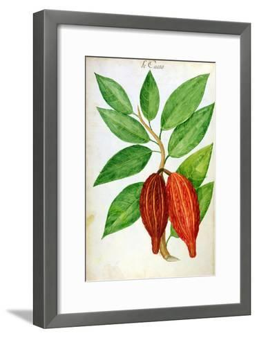 Cacao, from a Manuscript on Plants and Civilization in the Antilles, circa 1686-Charles Plumier-Framed Art Print
