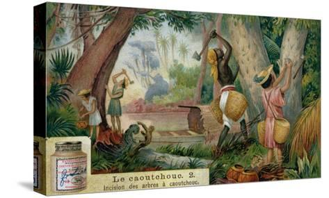 "Tapping Rubber Trees, Promotional Advertising Card for ""Veritable Extrait De Viande Liebig""--Stretched Canvas Print"