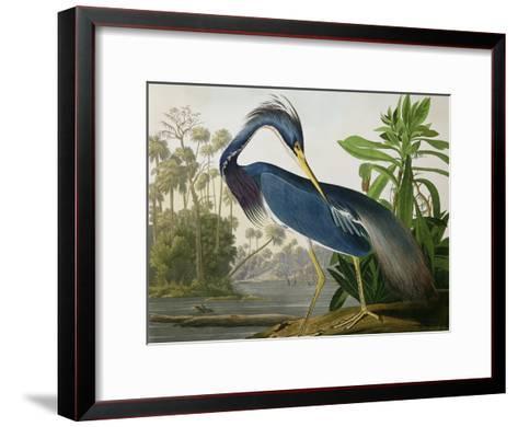 "Louisiana Heron from ""Birds of America""-John James Audubon-Framed Art Print"