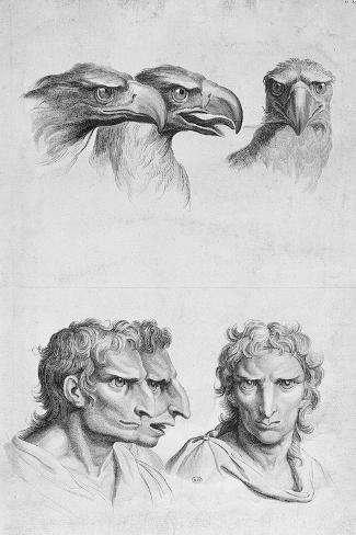 Similarities Between the Head of an Eagle and a Man-Charles Le Brun-Stretched Canvas Print