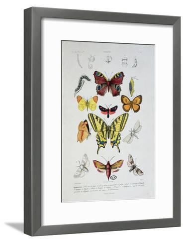 "Various Butterflies from ""Dictionnaire Elementaire D'Histoire Naturelle""-A. Baron-Framed Art Print"