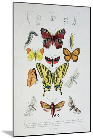 """Various Butterflies from """"Dictionnaire Elementaire D'Histoire Naturelle""""-A. Baron-Mounted Giclee Print"""