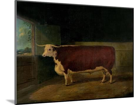 Portrait of a Prize Hereford Steer, 1874-Richard Whitford-Mounted Giclee Print