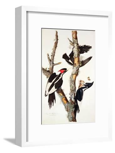 Ivory-Billed Woodpecker, 1829-John James Audubon-Framed Art Print