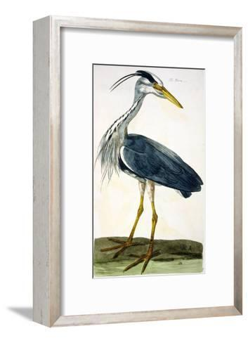 """The Heron Plate from """"The British Zoology Class II: Birds""""-Peter Paillou-Framed Art Print"""