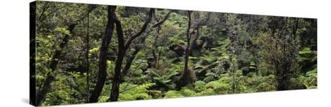 High Angle View of Trees in a Rainforest, Hawaii Volcanoes National Park, Hawaii, USA--Stretched Canvas Print