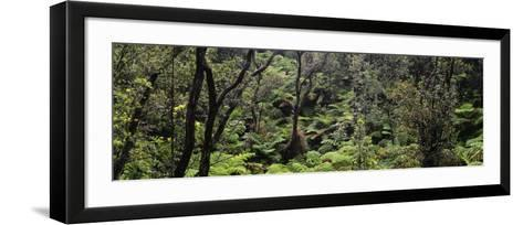 High Angle View of Trees in a Rainforest, Hawaii Volcanoes National Park, Hawaii, USA--Framed Art Print