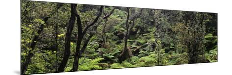 High Angle View of Trees in a Rainforest, Hawaii Volcanoes National Park, Hawaii, USA--Mounted Photographic Print