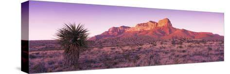 Morning, Mountain, National Park, Guadalupe Mountains, Texas, United States--Stretched Canvas Print