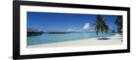 Palm Tree on the Beach, Moana Beach, Bora Bora, Tahiti, French Polynesia--Framed Art Print