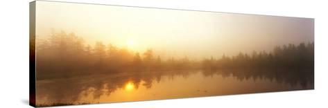 Misty Morning, Volvo Bog, Illinois, USA--Stretched Canvas Print