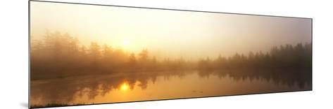 Misty Morning, Volvo Bog, Illinois, USA--Mounted Photographic Print