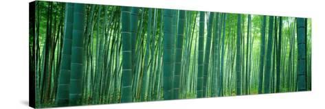 Bamboo Forest, Sagano, Kyoto, Japan--Stretched Canvas Print