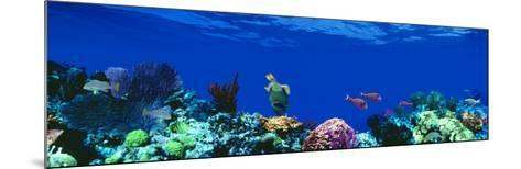 Underwater, Caribbean Sea--Mounted Photographic Print