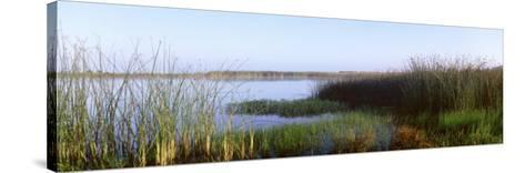 Pond, Half Moon Bay, California, USA--Stretched Canvas Print