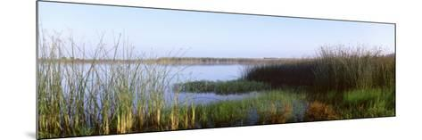 Pond, Half Moon Bay, California, USA--Mounted Photographic Print