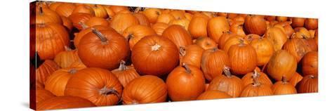 Close-up of Pumpkins--Stretched Canvas Print