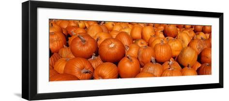 Close-up of Pumpkins--Framed Art Print