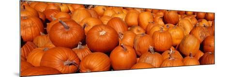 Close-up of Pumpkins--Mounted Photographic Print