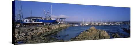 Boats Docked at a Harbor, Marina, Monterey, California, USA--Stretched Canvas Print
