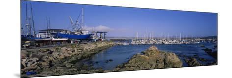 Boats Docked at a Harbor, Marina, Monterey, California, USA--Mounted Photographic Print
