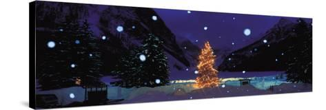Tree with Lights and Chateau, Lake Louise, Alberta, Canada--Stretched Canvas Print