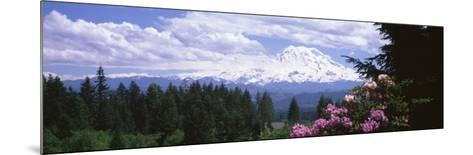 Mount Rainier and Spring Rhododendrons, Graham, Washington State, USA--Mounted Photographic Print
