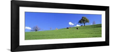 Cows, Canton Zug, Switzerland--Framed Art Print