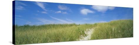 Grass on Sand Dunes, Cape Cod, Massachusetts, USA--Stretched Canvas Print