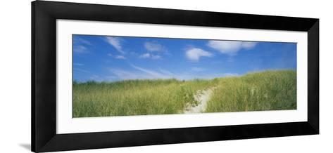 Grass on Sand Dunes, Cape Cod, Massachusetts, USA--Framed Art Print