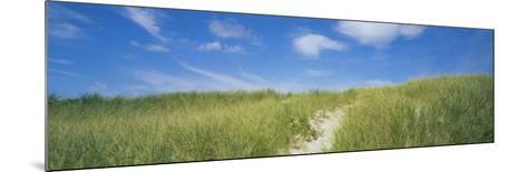 Grass on Sand Dunes, Cape Cod, Massachusetts, USA--Mounted Photographic Print