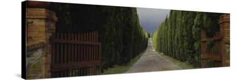 Road, Tuscany, Italy--Stretched Canvas Print