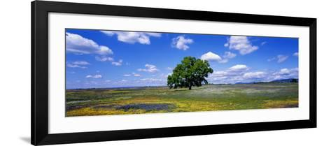 Single Tree in Field of Wildflowers, Table Mountain, Oroville, California, USA--Framed Art Print