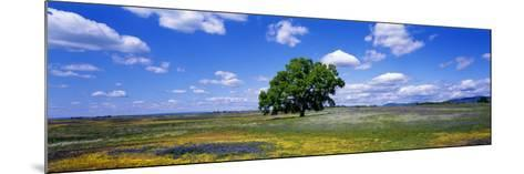 Single Tree in Field of Wildflowers, Table Mountain, Oroville, California, USA--Mounted Photographic Print
