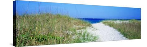 Path to Beach, Venice, Florida, USA--Stretched Canvas Print