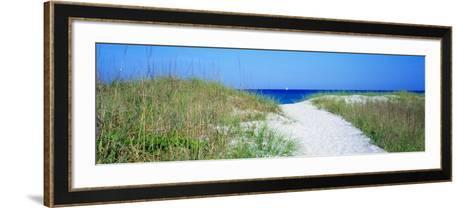 Path to Beach, Venice, Florida, USA--Framed Art Print