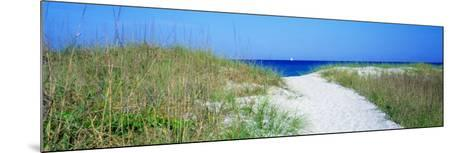 Path to Beach, Venice, Florida, USA--Mounted Photographic Print